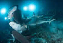Underwater Photographer of the Week: Richard Barnden