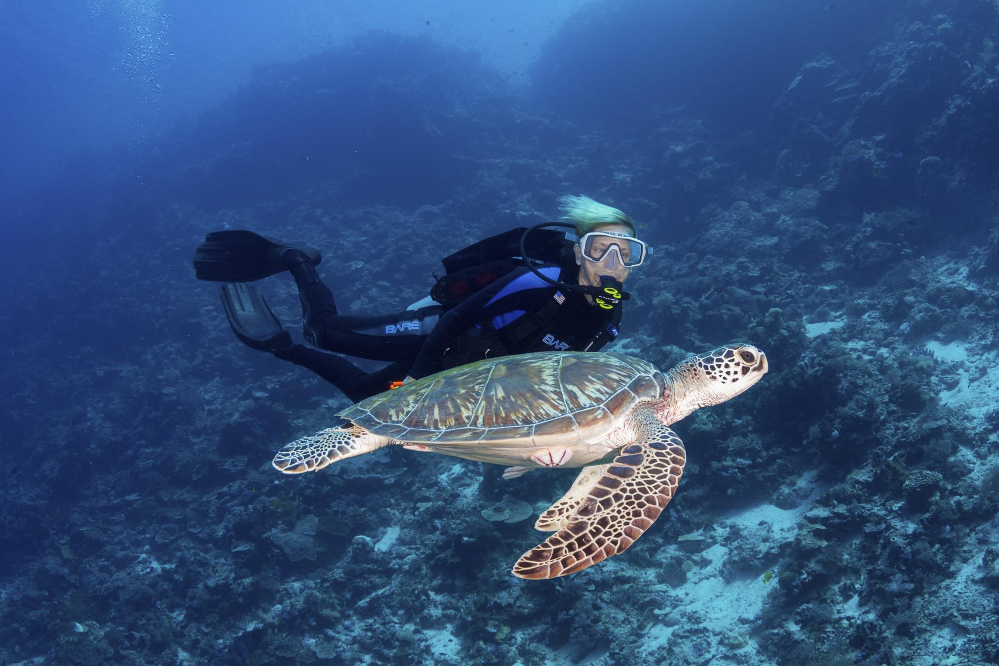 Wakatobi Resort diver and turtle