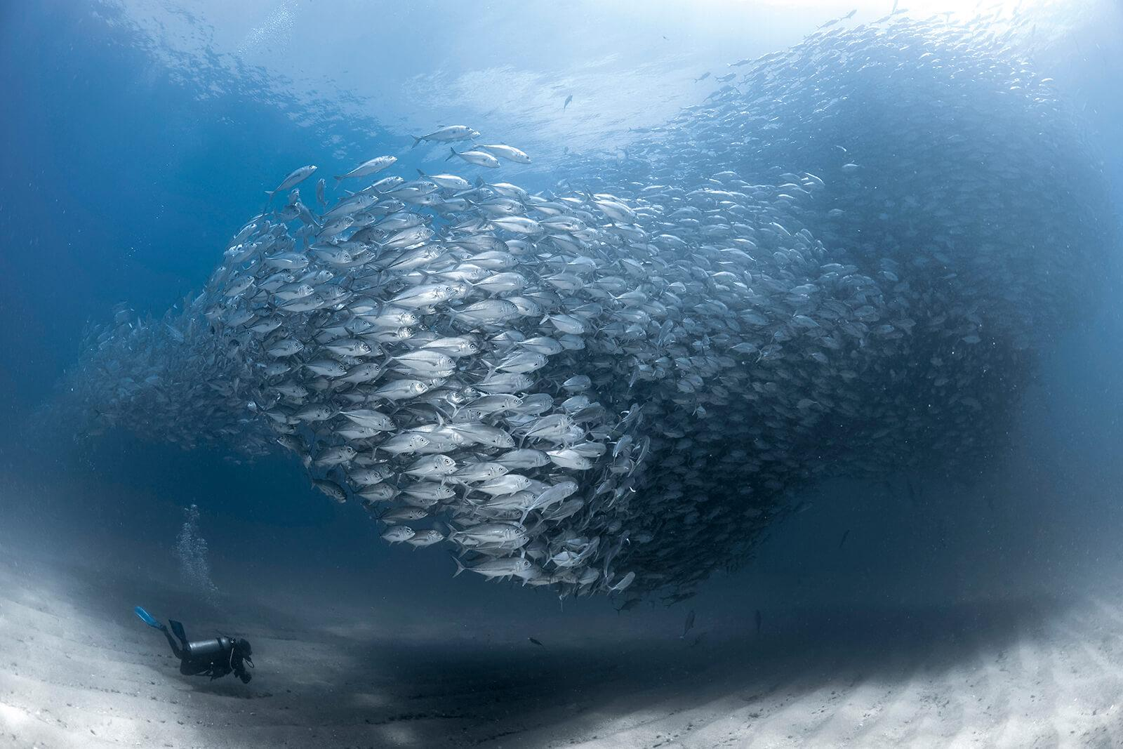 Underwater Photographer of the Week Fabrice Guerin