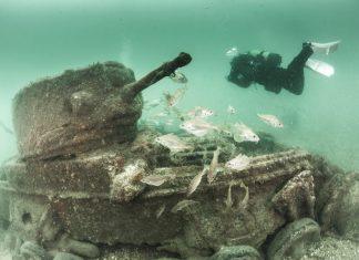 Underwater Photographer of the Week Paul Pettitt