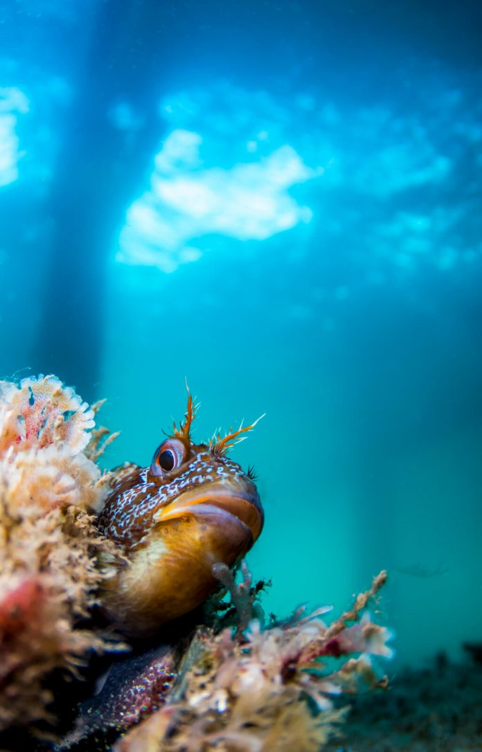 Underwater Photographer of the Week Paul Pettitt