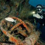 wreck diving grenada 5