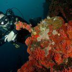 wreck diving grenada 7