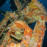 wreck diving grenada 9