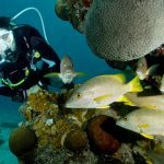 Diving Bonaire 13