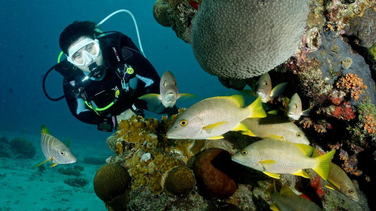 Diving Bonaire 1