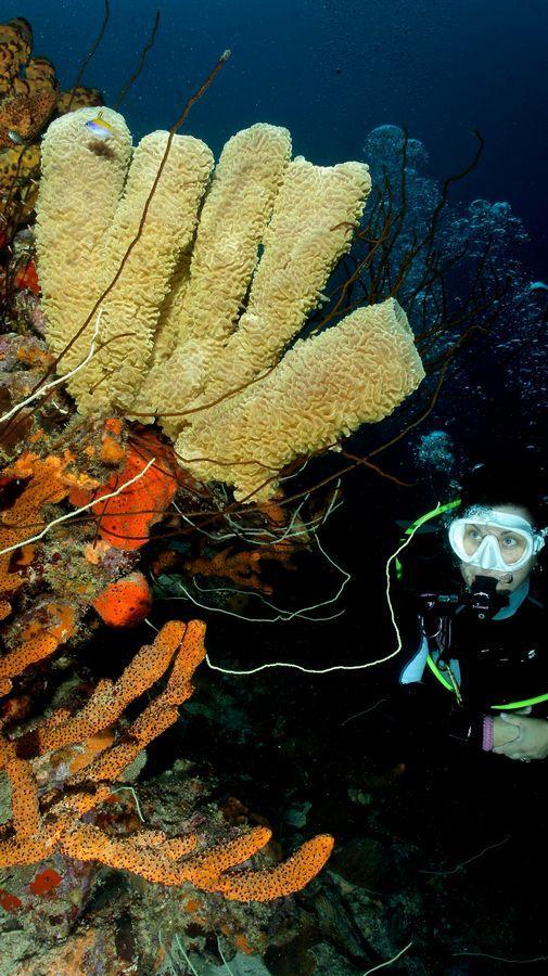 Diving Bonaire 12