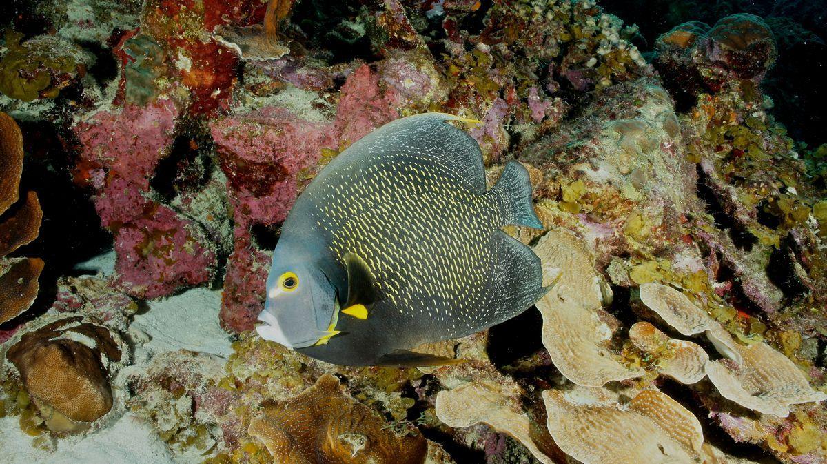Diving Bonaire 11