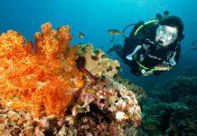 Scuba Diver Magazine 17
