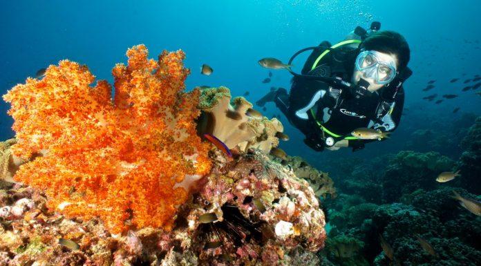 Scuba Diver Magazine 14