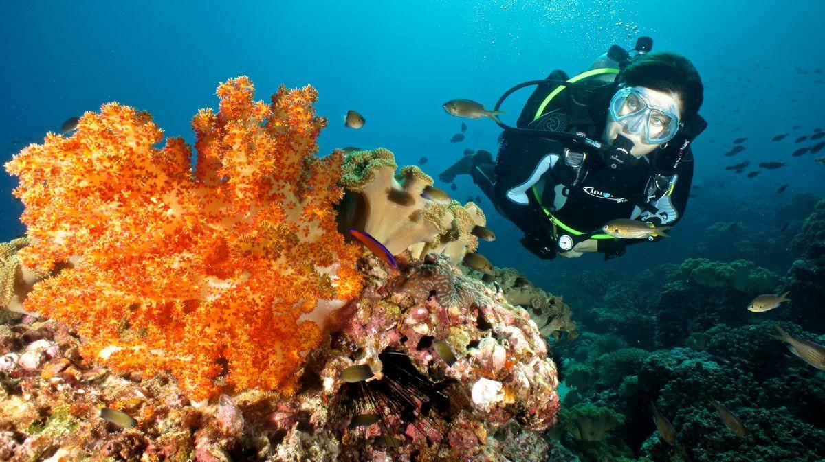 diving oman 23