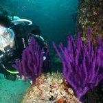 diving oman 4