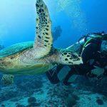 diving oman 8