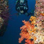 diving oman 9
