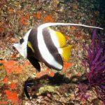 diving oman 3