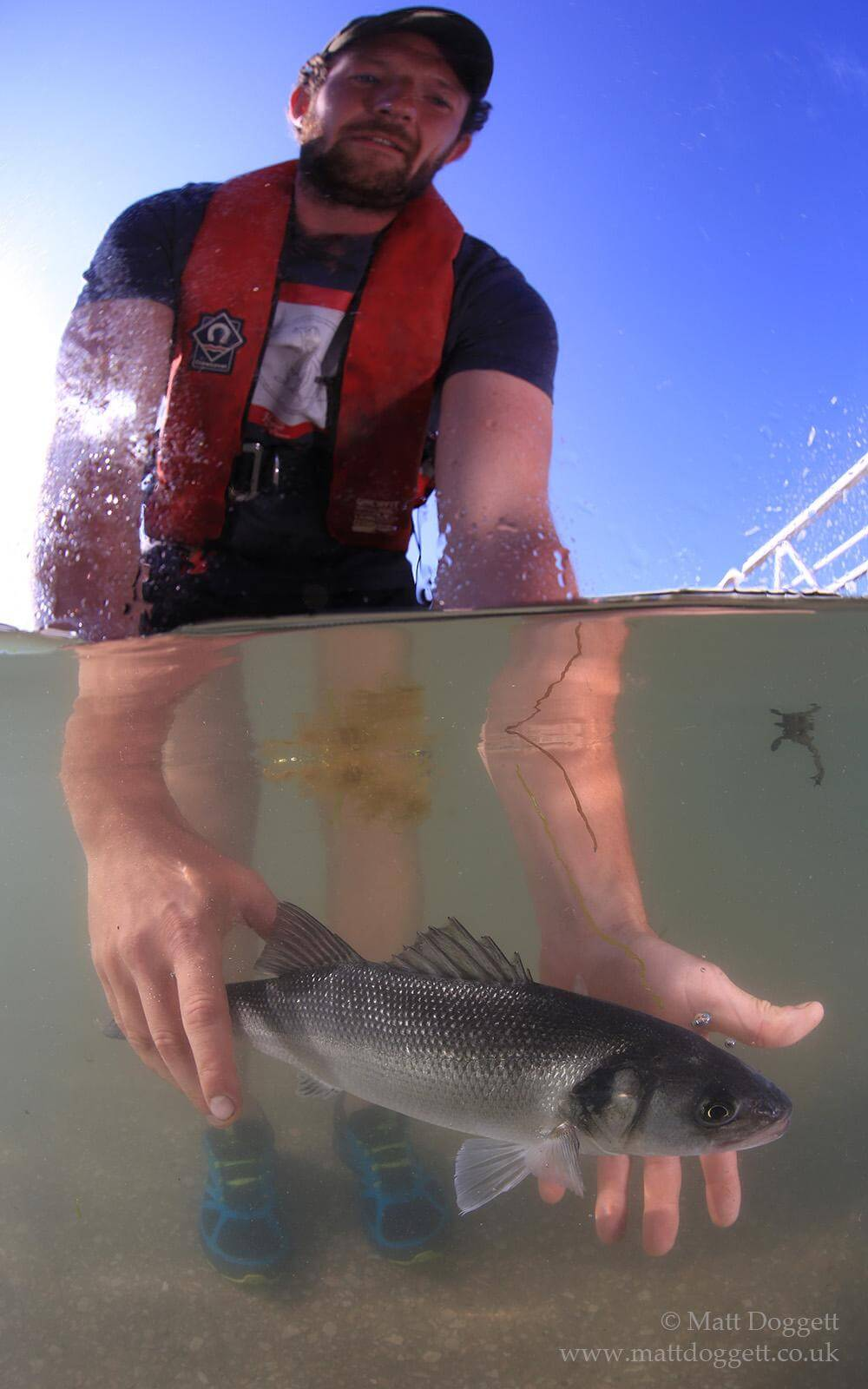 Documenting the release of a tagged bass as part of Plymouth University's i-BASS project.