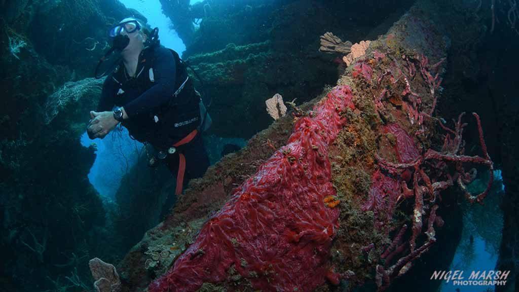 102 diving docs descend on Solomons for 2019 SPUMS conference 3