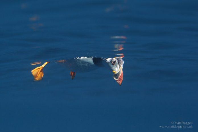 Underwater Photographer of the Week Matt Doggett