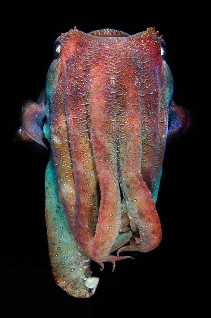 Underwater Photographer of the Week Amanda Cotton