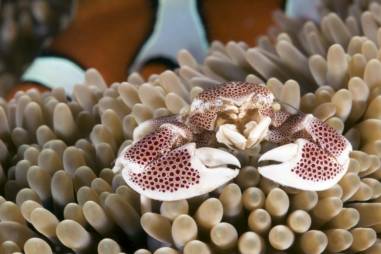 Wakatobi marine life