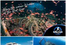 Scuba Travel, Egypt, Red Sea, Whirlwind, Liveaboard, Wrecks and Reefs