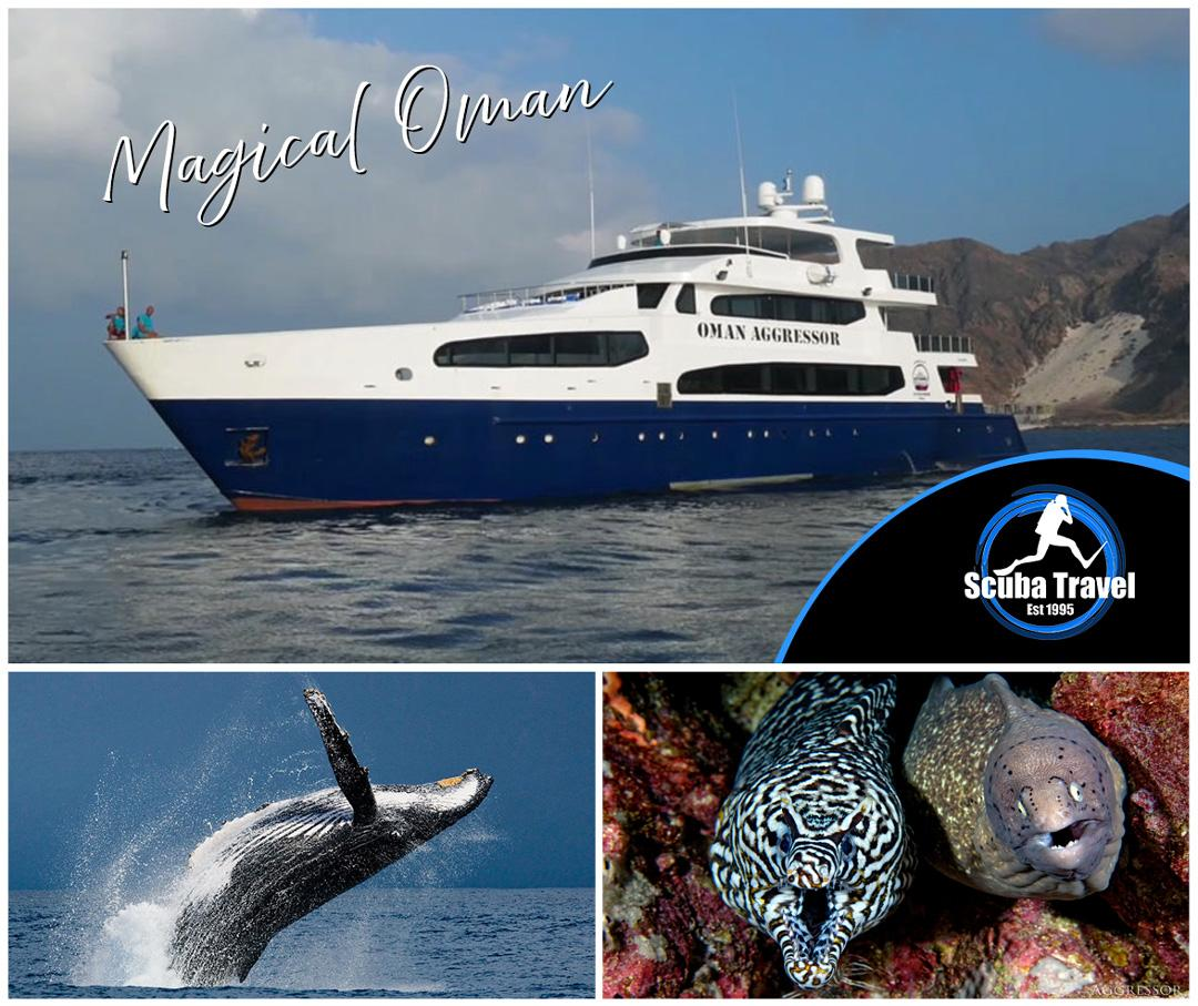 Scuba Travel, Oman, Liveaboard, Oman Aggressor