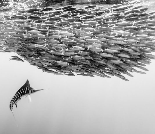Underwater Photographer of the Week Christian Vizl