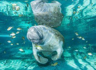 Underwater Photographer of the Week Dan Bolt