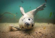 Underwater Photographer of the Week: Martin Edser