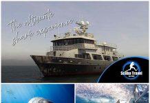 Scuba Travel, Socorro Vortex, Great white sharks