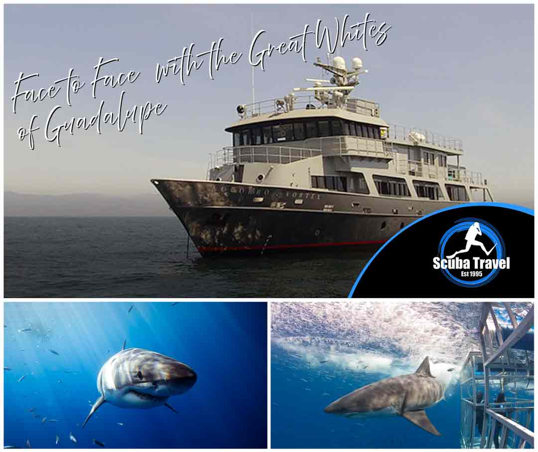 Scuba Travel, Guadalupe Island, Socorro Vortex, Great White sharks