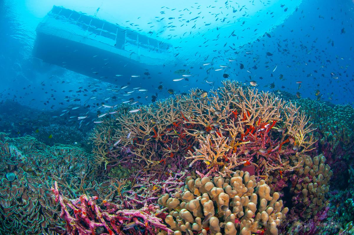 Wakatobi dive site conservation