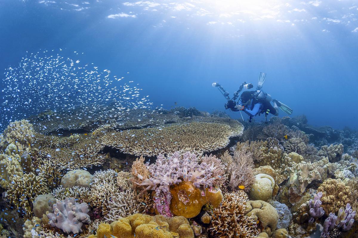 Wakatobi diver