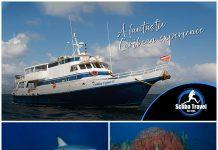 Scuba Travel, Caribbean, Saba & St. Kits. Caribean Explorer 2