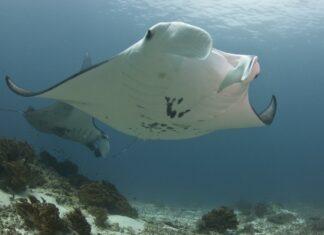 Scuba Diver Magazine 2