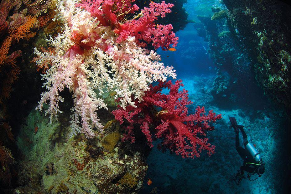 Red Sea Diving 1