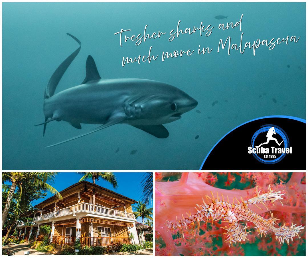 Scuba Travel, Philippines. Malapascua, Exotic