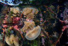 Underwater Photographer of the Week: Joe Daniels