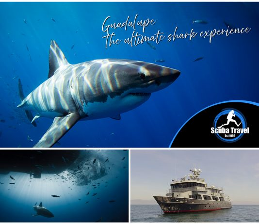 Scuba Travel, Socorro Vortex, Great white sharks