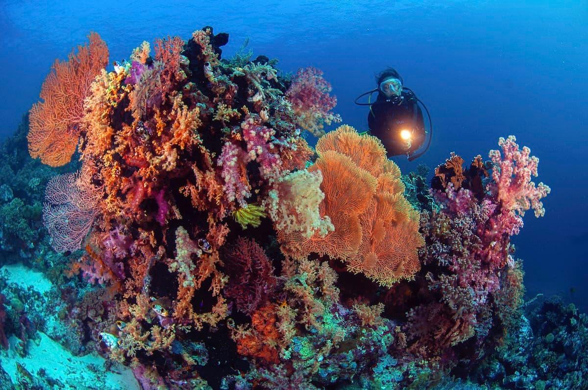 Diver brilliant coral head Pelagian