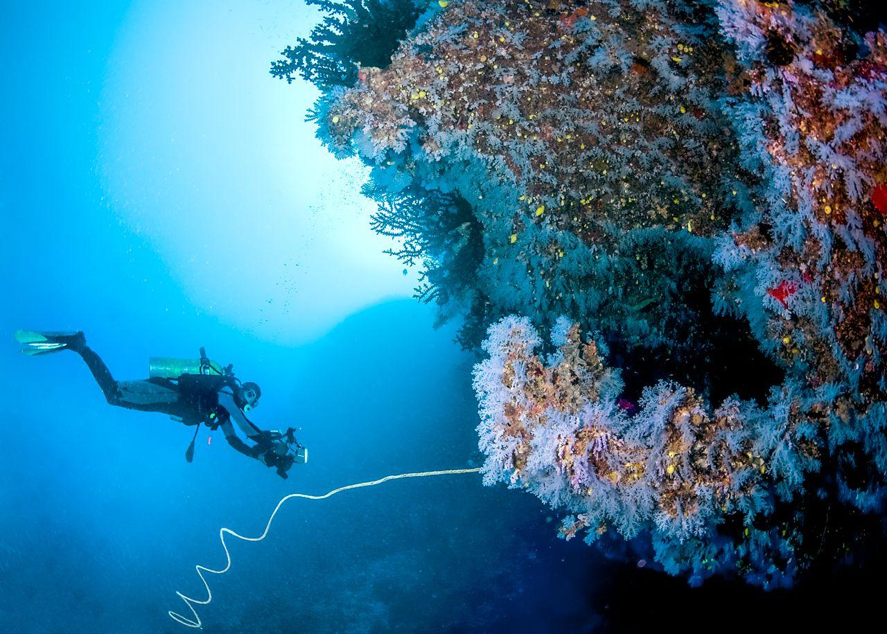 The 6 Best Dive Sites of the South Pacific 6