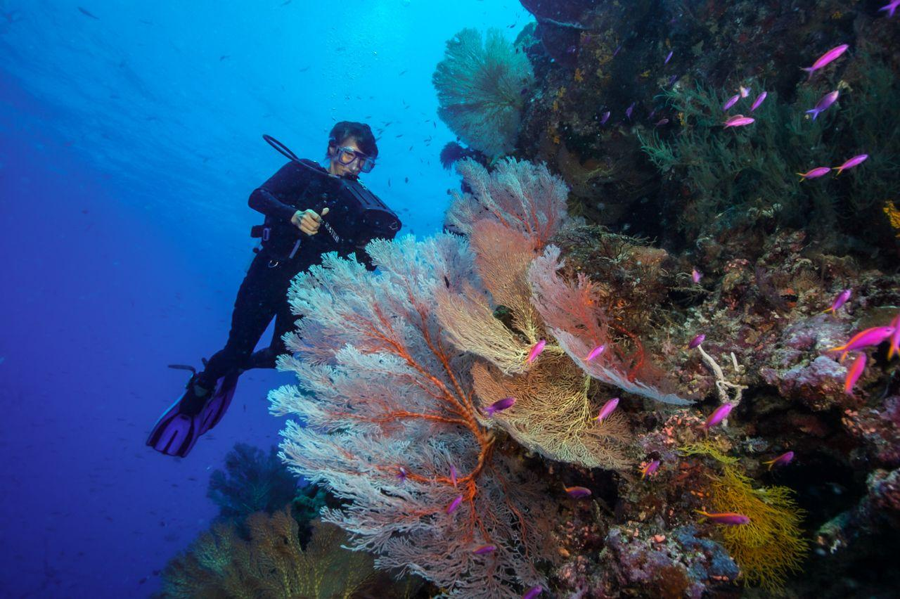 The 6 Best Dive Sites of the South Pacific 4