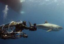 Diving Liveaboard