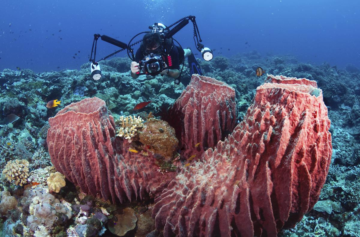 Wakatobi diving