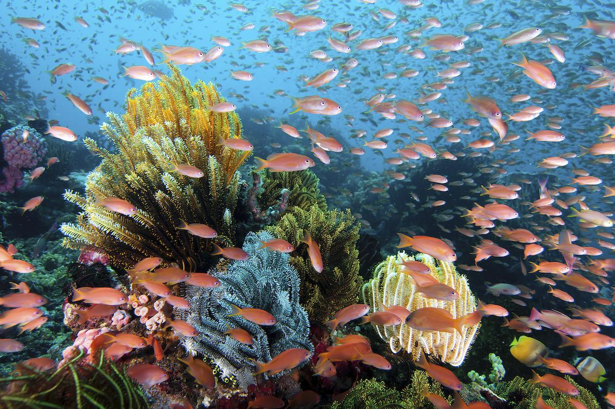 Wakatobi's coral reefs are famous for their diverse marine life. Copyright Walt Stearns