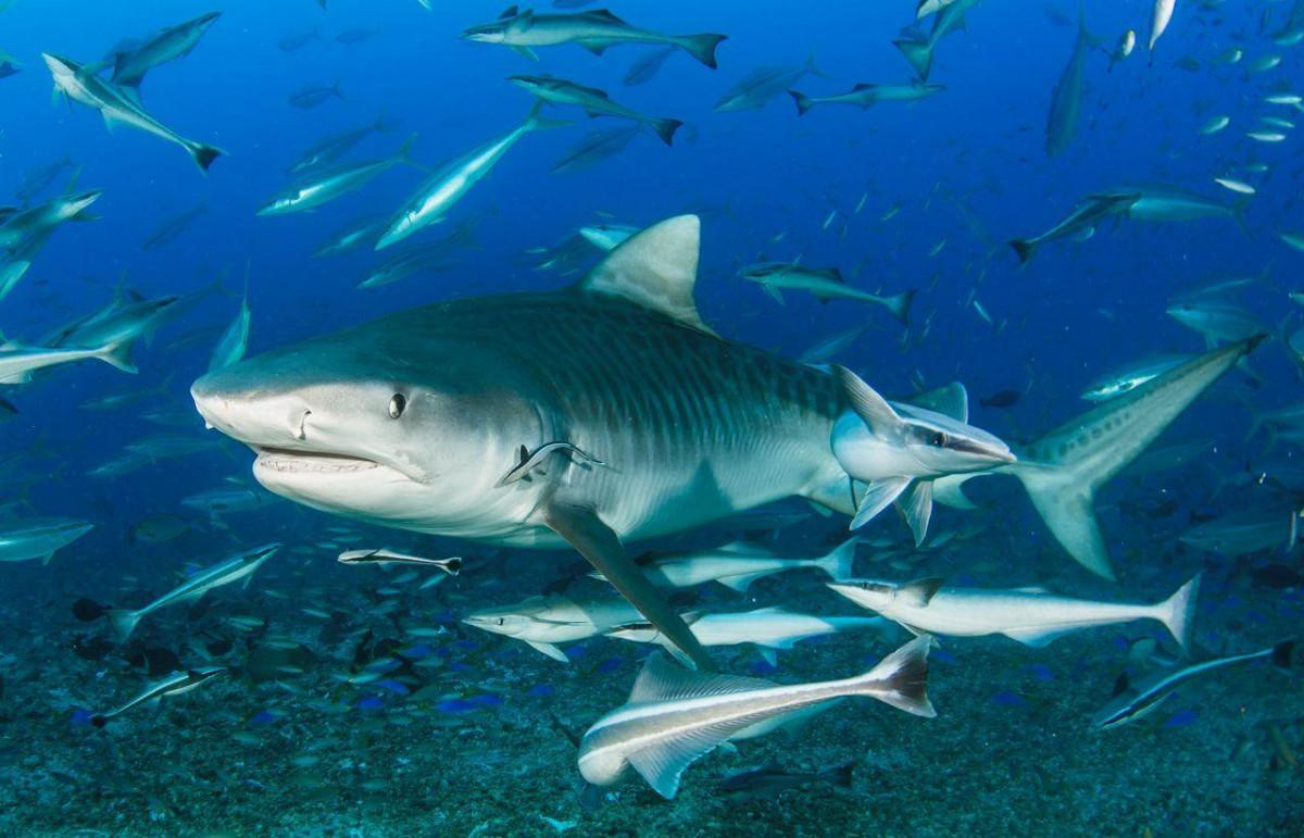 The 6 Best Dive Sites of the South Pacific