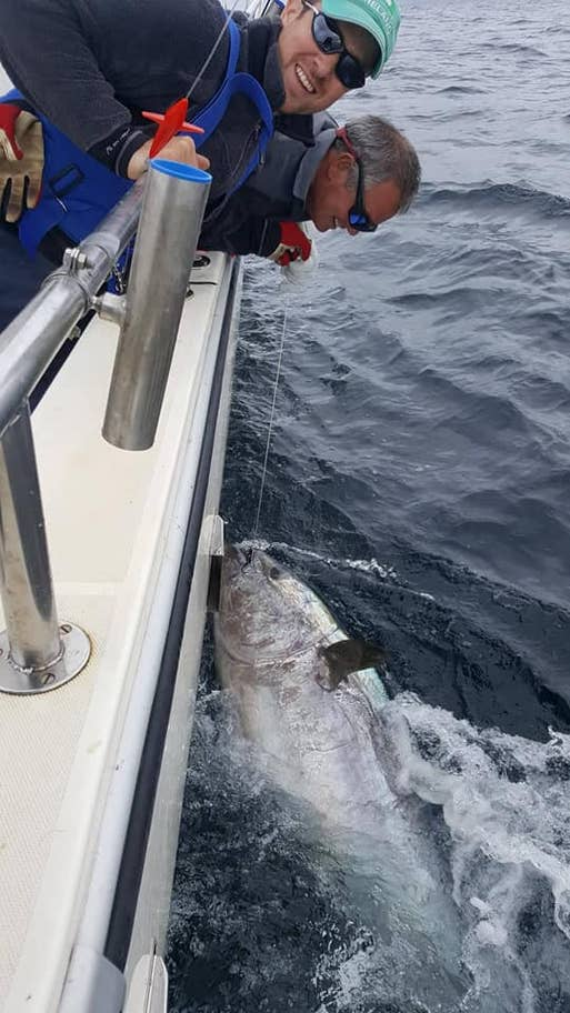 Bluefin tuna by Dave Edwards of West Cork Charters
