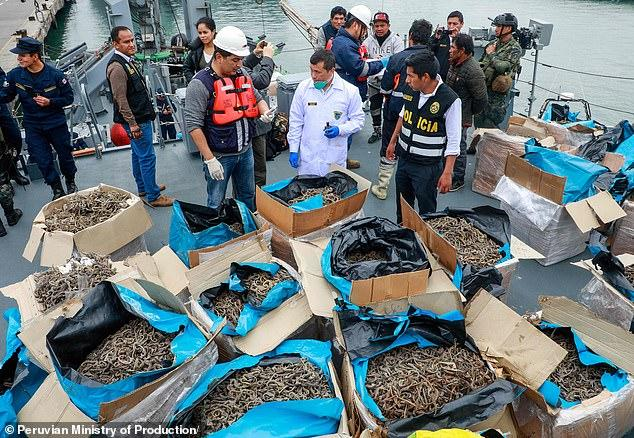 Ship seized carrying over 12 million dried seahorses 2