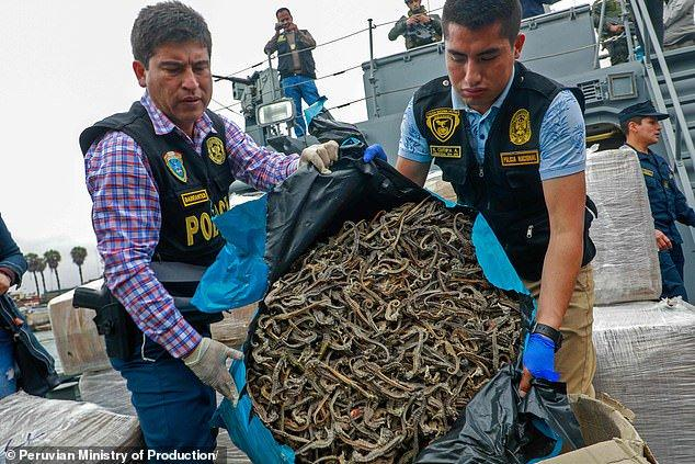Ship seized carrying over 12 million dried seahorses 1