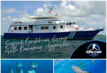 Scuba Travel, Bahamas Aggressor, Bahamas, Caribbean, Liveaboard
